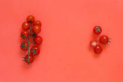 Cherry tomatoes on a coral red background