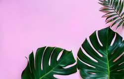 Tropical monstera and palm leaves on a light pink background