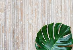 Tropical monstera leaf on a wooden background