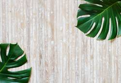 Tropical monstera and palm leaves on a wooden background