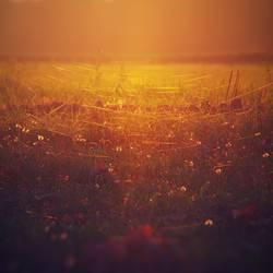 Sonnenuntergang auf der Wiese