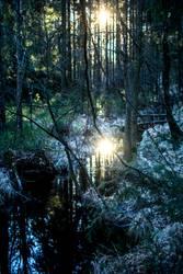 Frostiger Winter im Wald