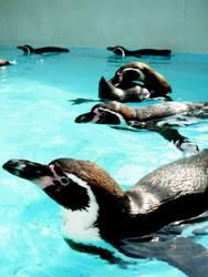 Pinguin-Alarm