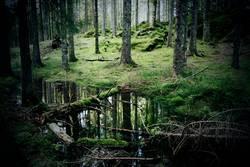 Deutscher Wald.