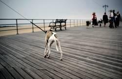 Sunday walk on the Boardwalk.