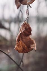Herbstblatt mit Eiskristallen