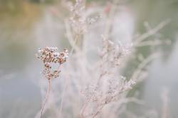 Winter Pastell