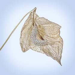 vertrocknete Blüte einer Einblatt Pflnze