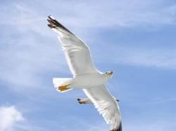 Extreme Nahaufname von zwei fliegenden Vögeln
