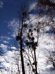 herbstbaum kitzelt himmel