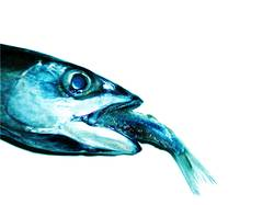 fisch isst fisch