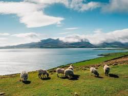 Irland - Brandon Point