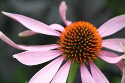 komische Blume