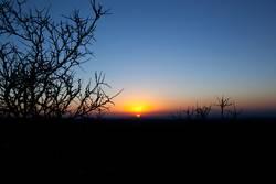Sunrise and thorns