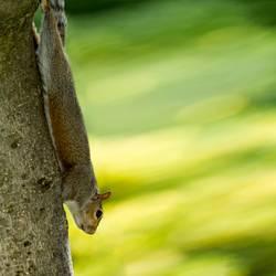 Hörnchenbungee