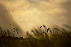 Der Wind, der Wind