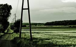 Grüne Einöde