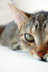 mogli, the cat II