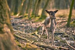 Bambi 02