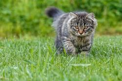Junge Katze spielt im Gras...