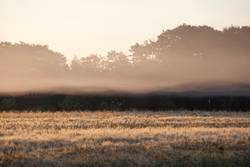 Frühpoel auf Nebel Insel - II