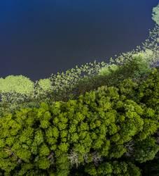 Wasserwald I