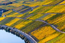 Herbst Mosel Weinreben Landschaft
