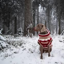 kalt......also warm anziehen