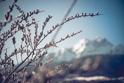 Hallo Frühling I