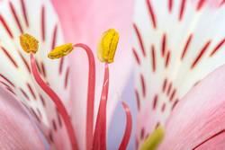 Makro Schuss Blume