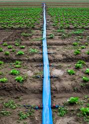 Planted agriculture land and pipe for watering.