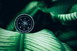 Kompass-Konzept für die Natur in Ihrem Leben zu finden