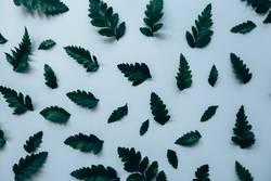 Kreatives Layout aus grünen Blättern. Flach legen. Natur-Konzept