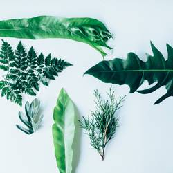 Creative layout made of green leaves
