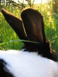 ein Hase saß im tiefen Gras...