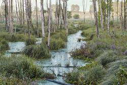 Swamp scenery, field, trees and grass flooded with water
