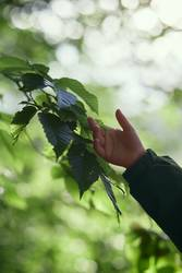 Childs hand touching leaves during walk in forest