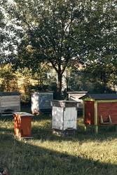Apiary with couple hives in a orchard