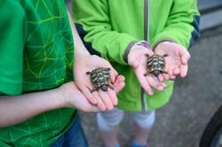 Schildkrötenbande