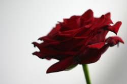 Eine besondere Blume