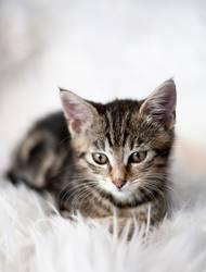 Noch ein Katzerl