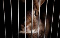 Hase im Käfig