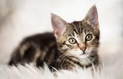 Ein Katzerl am Morgen..