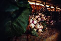 Fresh bunch of organic radish on food market