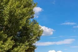 Baum und Himmel