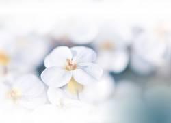 Blue Nature Macro Photography.Floral Art Design.