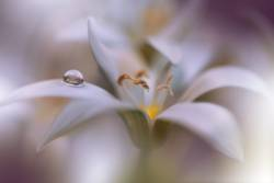 Gentle Romantic Artistic Image.Soft Pastel Background Blur.