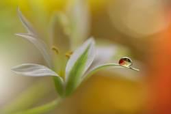 Gentle romantic artistic image. Soft pastel background blur.