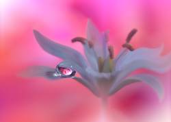 Beautiful Nature Macro Photography.Web Banner for Design.Art.
