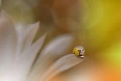 Beautiful Nature Macro Photography.